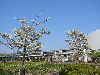 新潟県立近代美術館近辺